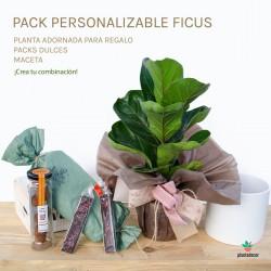 Pack Ficus Lyrata