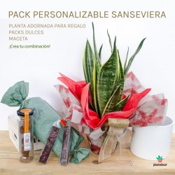 Pack Sanseviera