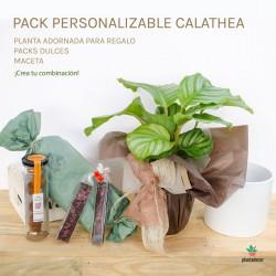 Pack Calathea Orbifolia