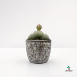 Maceta gris para cactus
