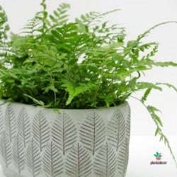 Jardinera de Cemento Bosque Verde