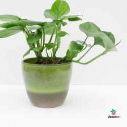 Macetero Flora Verde