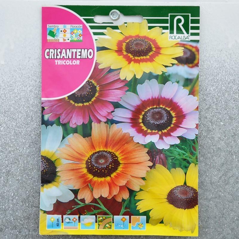 Crysanthemum Carinatum
