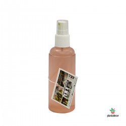 Spray Tillandsia