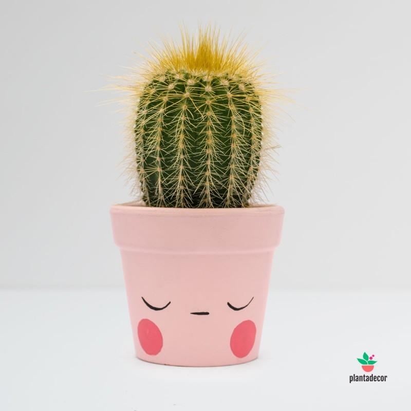 Maceta Caractus Ohmmm