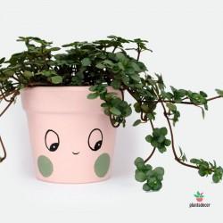 Maceta Ups Verde - Rosa