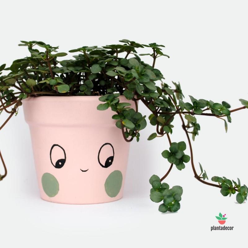 Macetero para plantas mini rosa Ups