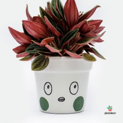 Maceta Caractus Grrr - Gris
