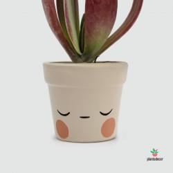 Maceta Caractus Ohmmm - Beige