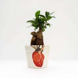 Maceta Anatomical Corazón...
