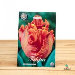 Bulbos de Tulipán Parrot...