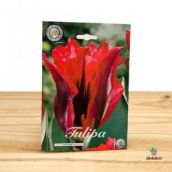 Bulbos de Tulipán Esperanto