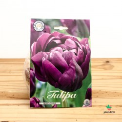 Bulbos de Tulipa Douple Late Negrita