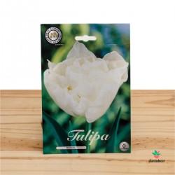 Bulbos de Tulipán Double Early Mondial