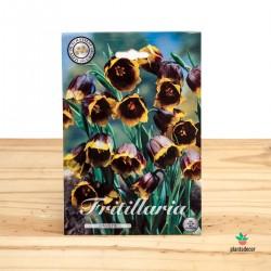 Bulbos de Fritillaria...