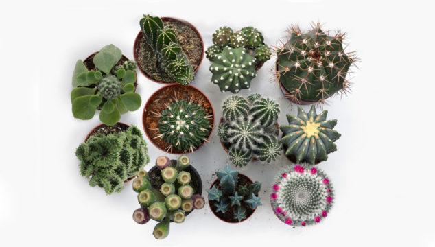 Cactus y suculentas de Plantadecor.com