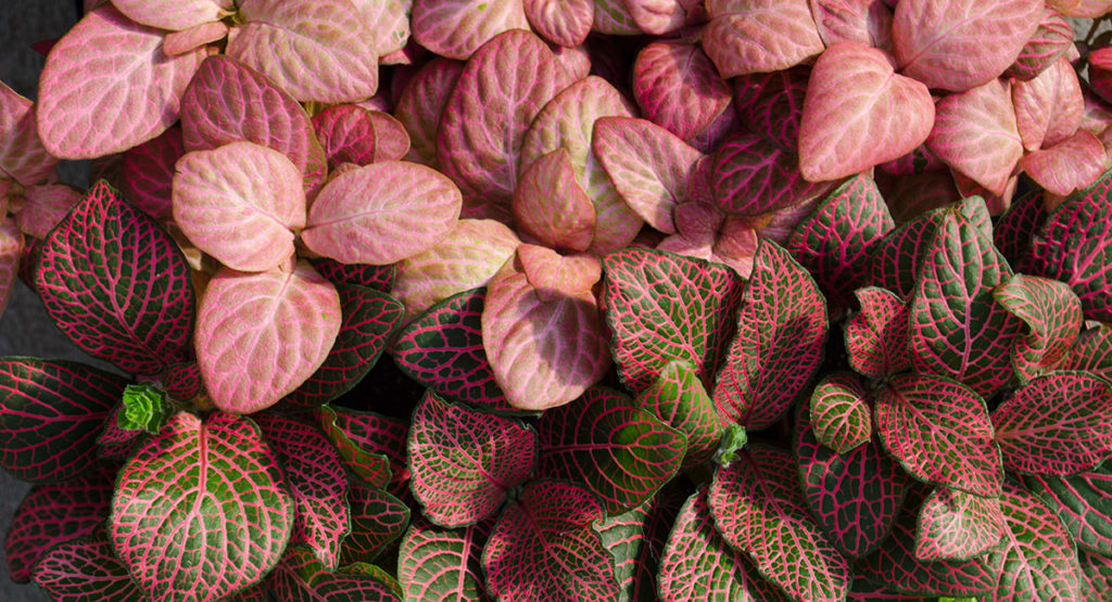 Inteligencia vegetal