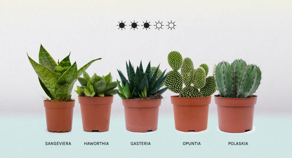 Plantas que necesitan menos luz